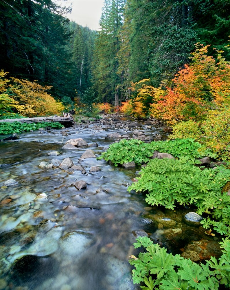 View of North Santiam River flowing through rocks Willamette National Forest Lane County Oregon USA Poster Print by Panoramic Images 28 x 22