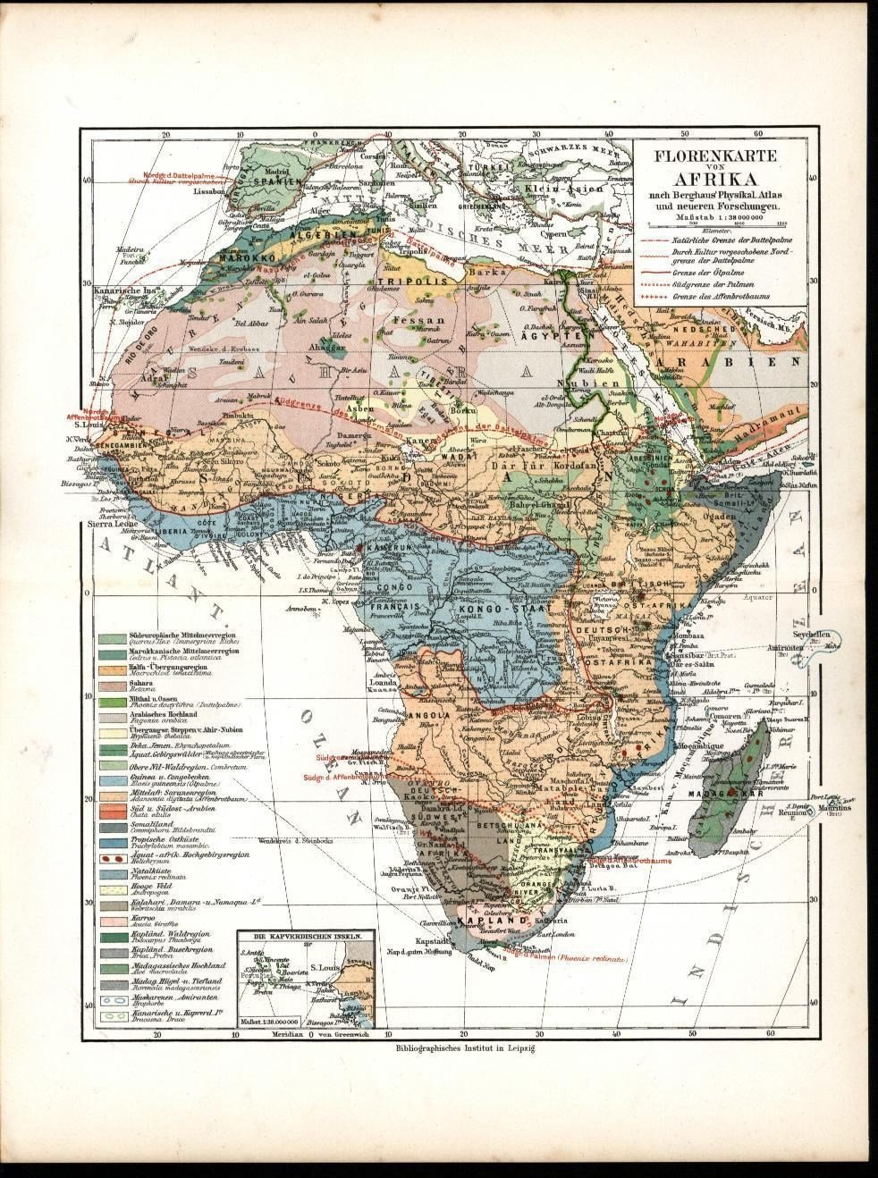Map Of Africa Vegetation.Amazon Com Flora Vegetation View Africa Sahara Desert 1903