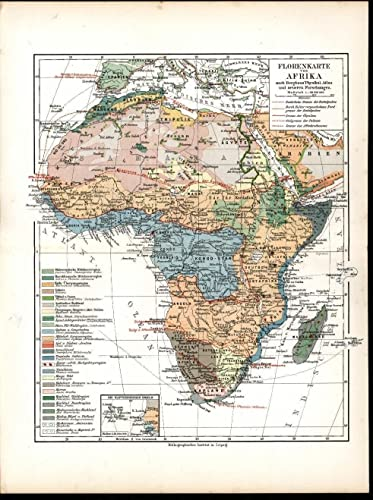 Map Of Africa Sahara Desert.Amazon Com Flora Vegetation View Africa Sahara Desert 1903