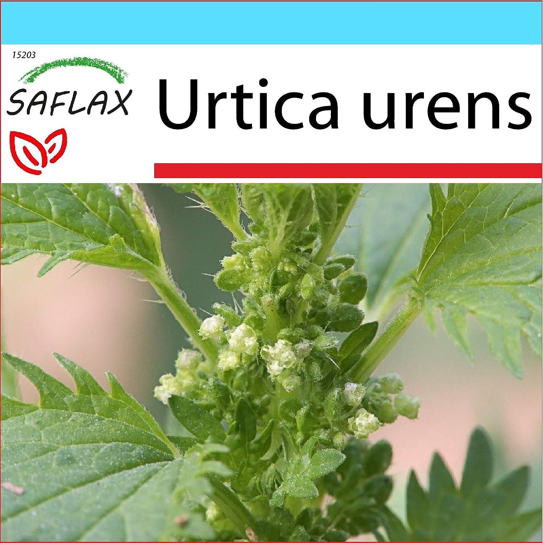 150 semi SAFLAX Urtica urens Ortica minore Confezione regalo