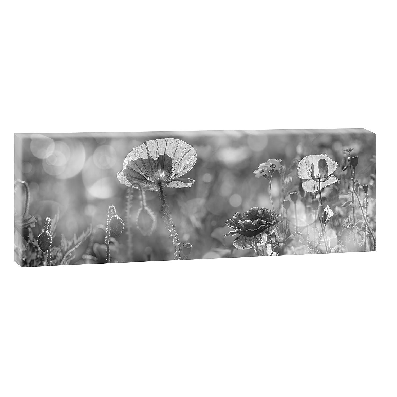 Poster Trendiger Kunstdruck auf Leinwand Wandbild Fotografie Blumenwiese Panoramabild im XXL Format Verschiedene Farben und Gr/ö/ßen 40 cm x 80 cm, Farbig