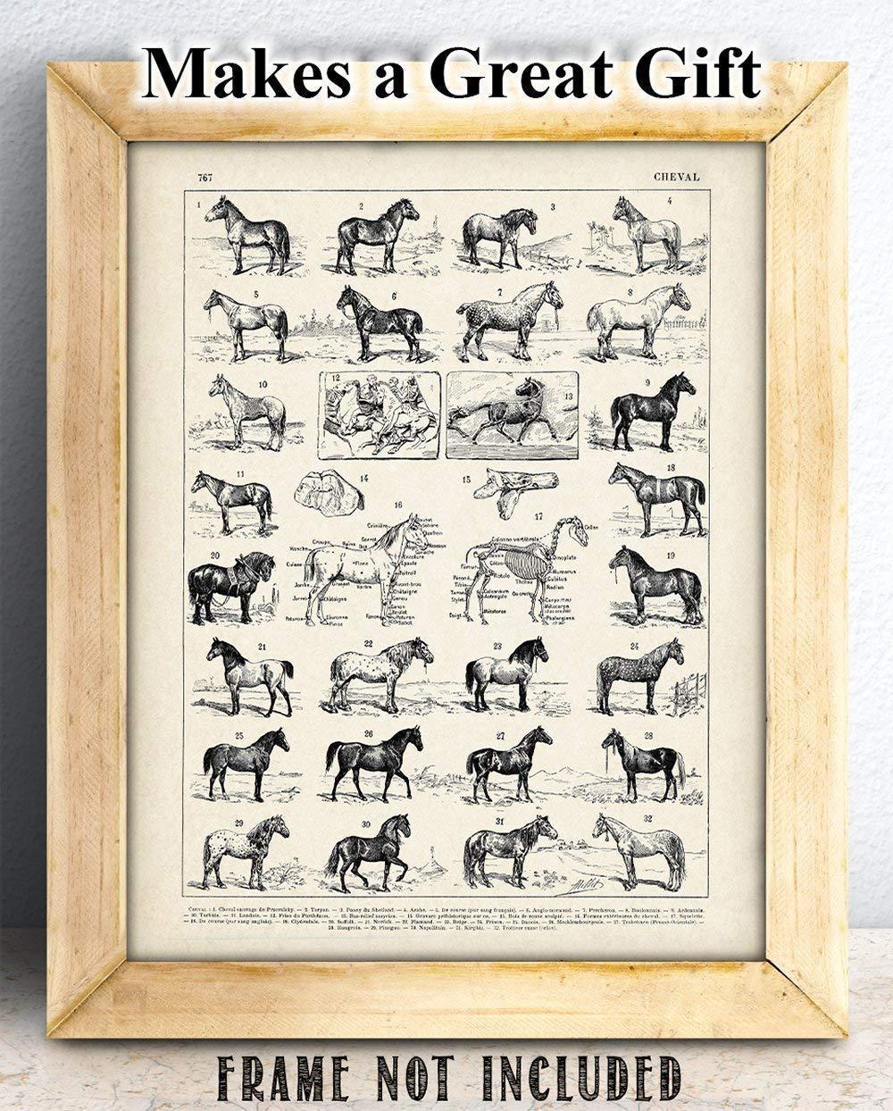 Amazon.com: Vintage French Horses - 11x14 Unframed Art Print ...