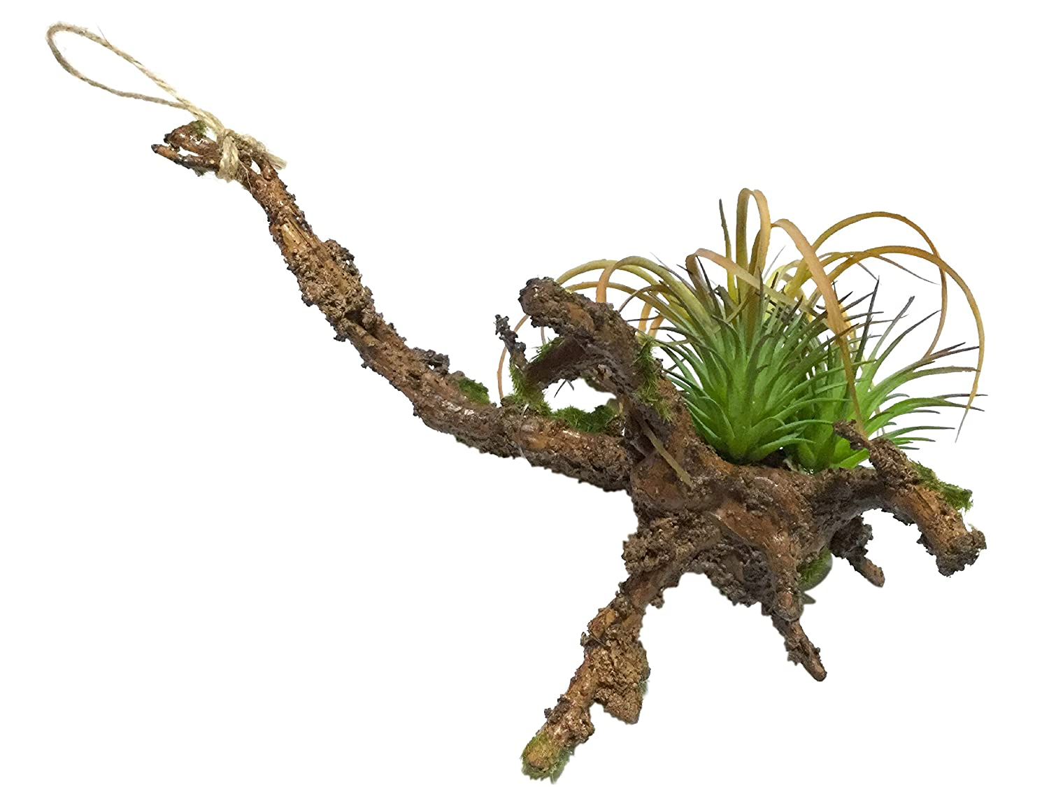 Oniwa Artificial Plants Hanging Air Plants 2 ways Succulent plants and moss