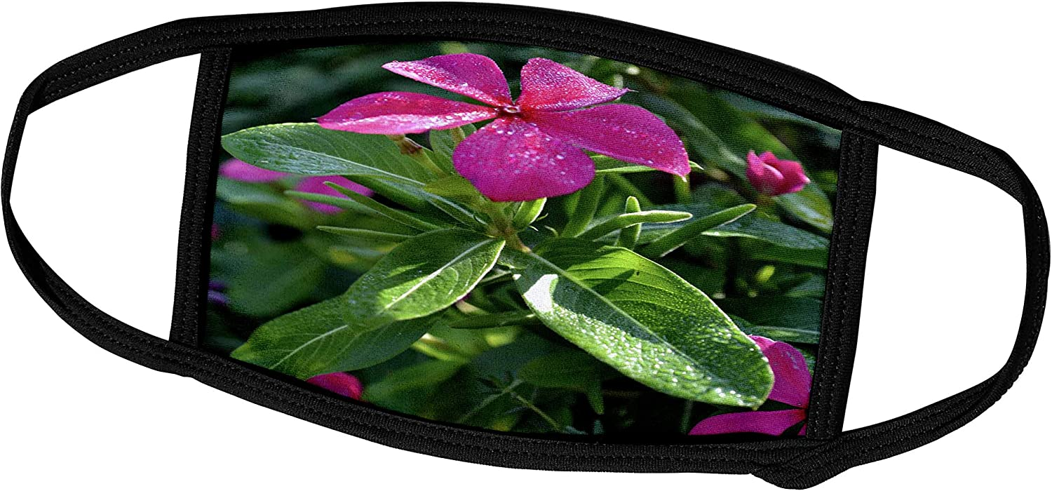 3dRose A Garden Phlox Flower in a Perfect Position - Face Covers (fc_77093_3)