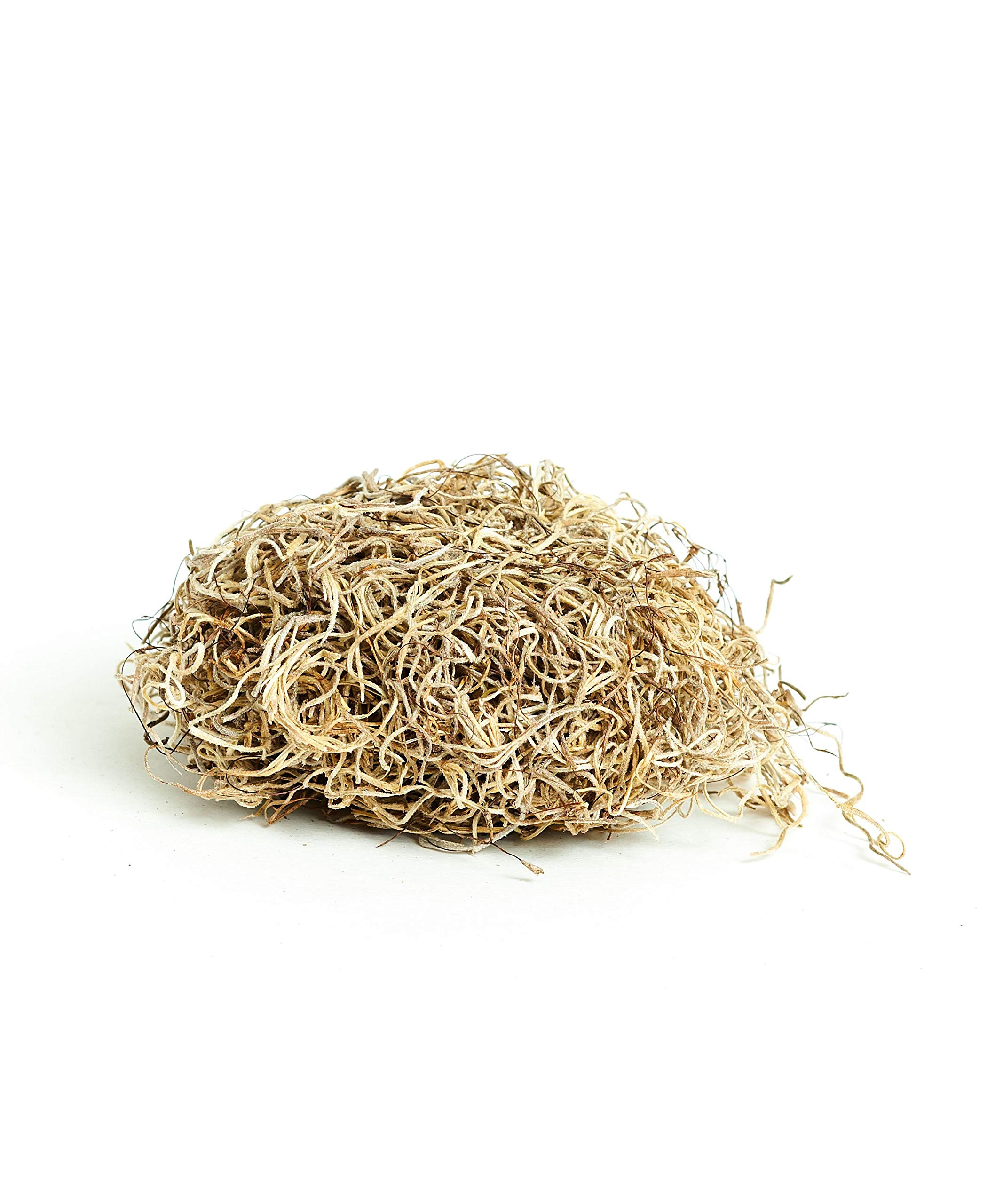 Shop Succulents Spanish Moss in Natural, 6 OZ