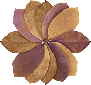 JOR Large Catappa Leaves for Hermit Crabs, 7