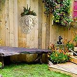 simpdecor Hanging Plant Pot & Wall Mounted