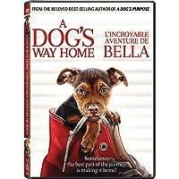 A Dog's Way Home (Bilingual)