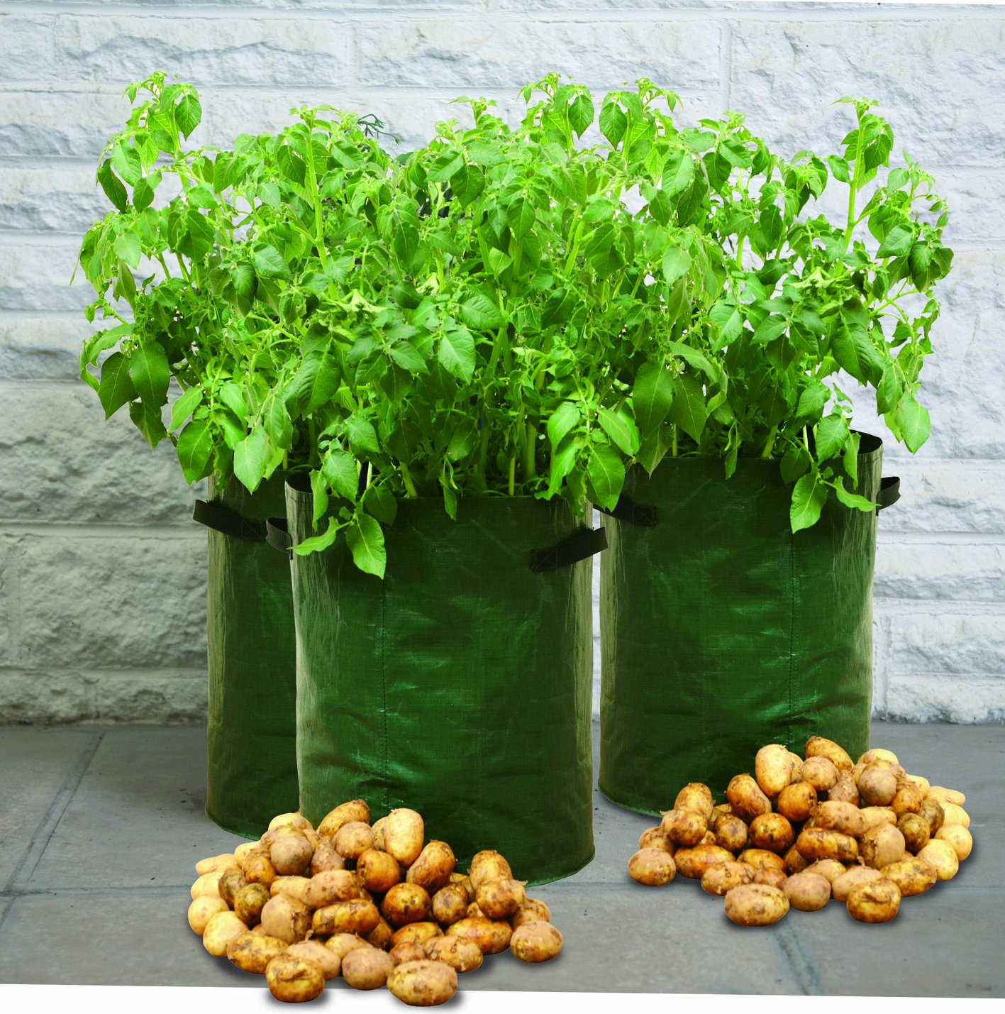 Amazon Tierra Garden 50 1040 Haxnicks Potato Patio Planter