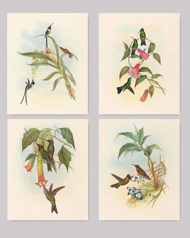 Hummingbird Wall Art (Botanical Bird Print, Tropical Wall Art) Set of 4 - Unframed