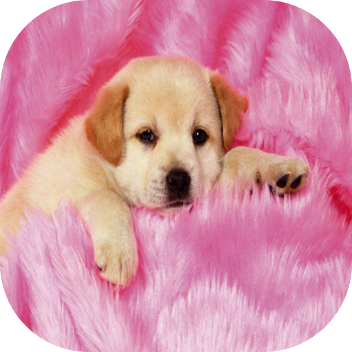 Amazon.com: Cute Dogs Live Wallpaper: Appstore for Android