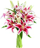 KaBloom Bouquet of 8 Fresh Cut Stargazer Lilies with Vase