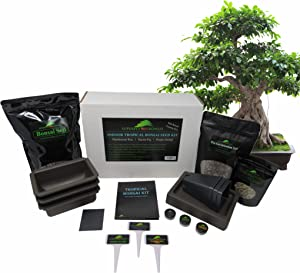 Tropical Indoor/Outdoor Bonsai Seed Kit (Tropical Level 2)