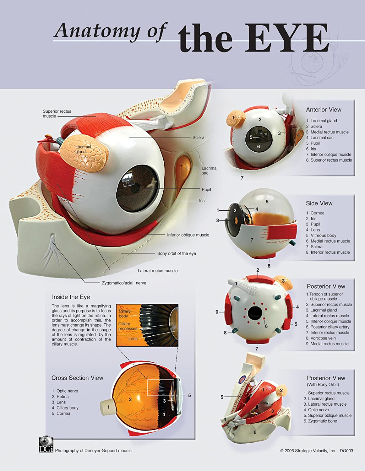 Anatomy Of The Eye Poster Amazon Industrial Scientific