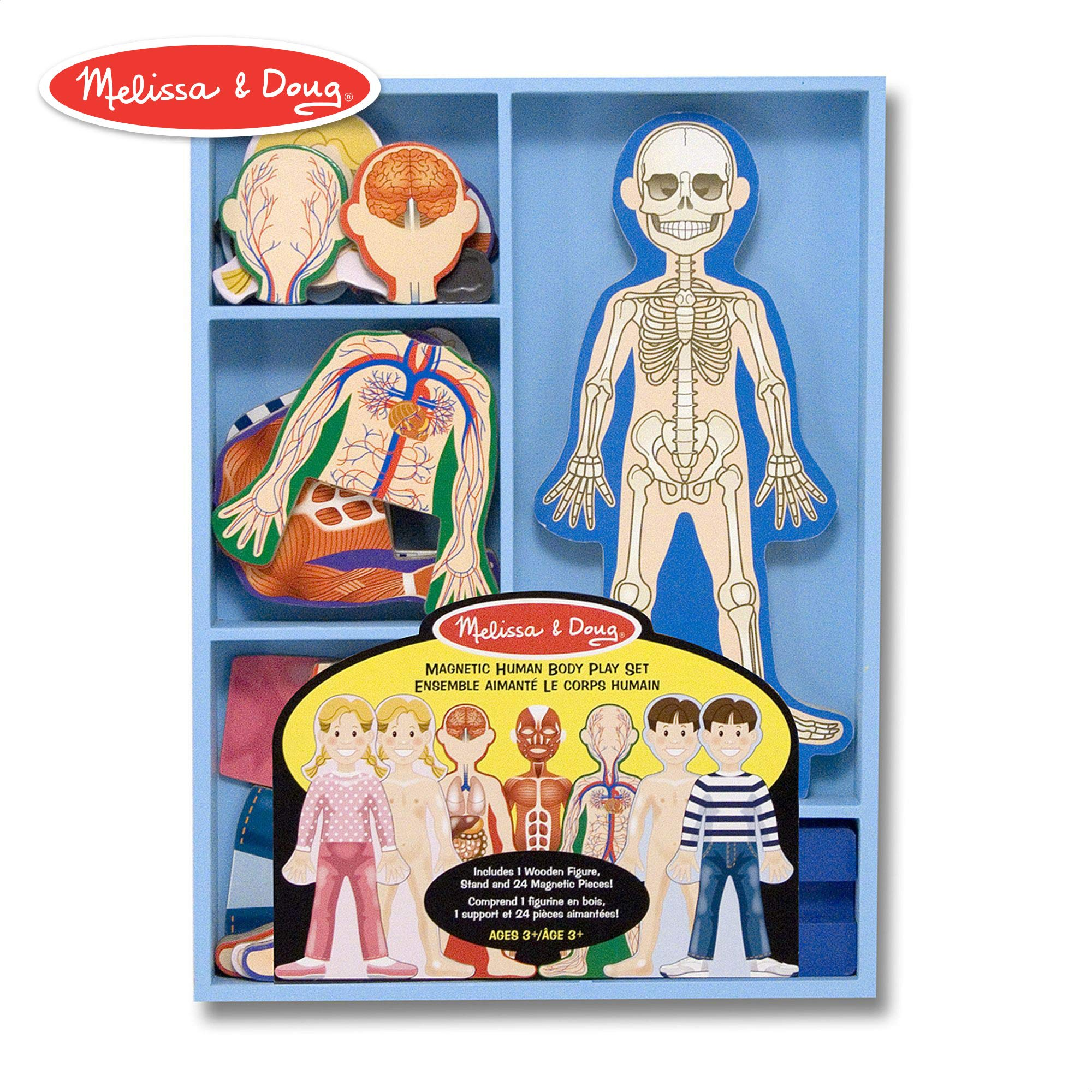 Melissa & Doug Magnetic Human Body Anatomy Play Set (Anatomically Correct Boy and Girl Magnets, 24 Magnetic Pieces and Storage Tray) by Melissa & Doug