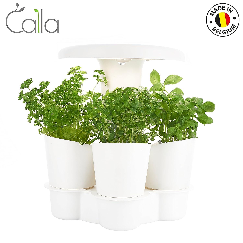Calla Garden Intelligenter, weiß weiß 4Senses CAL001