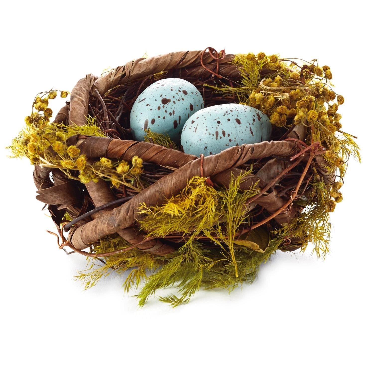 Blue Robins' Eggs in Nest Decoration Decorative Accessories Animals & Nature