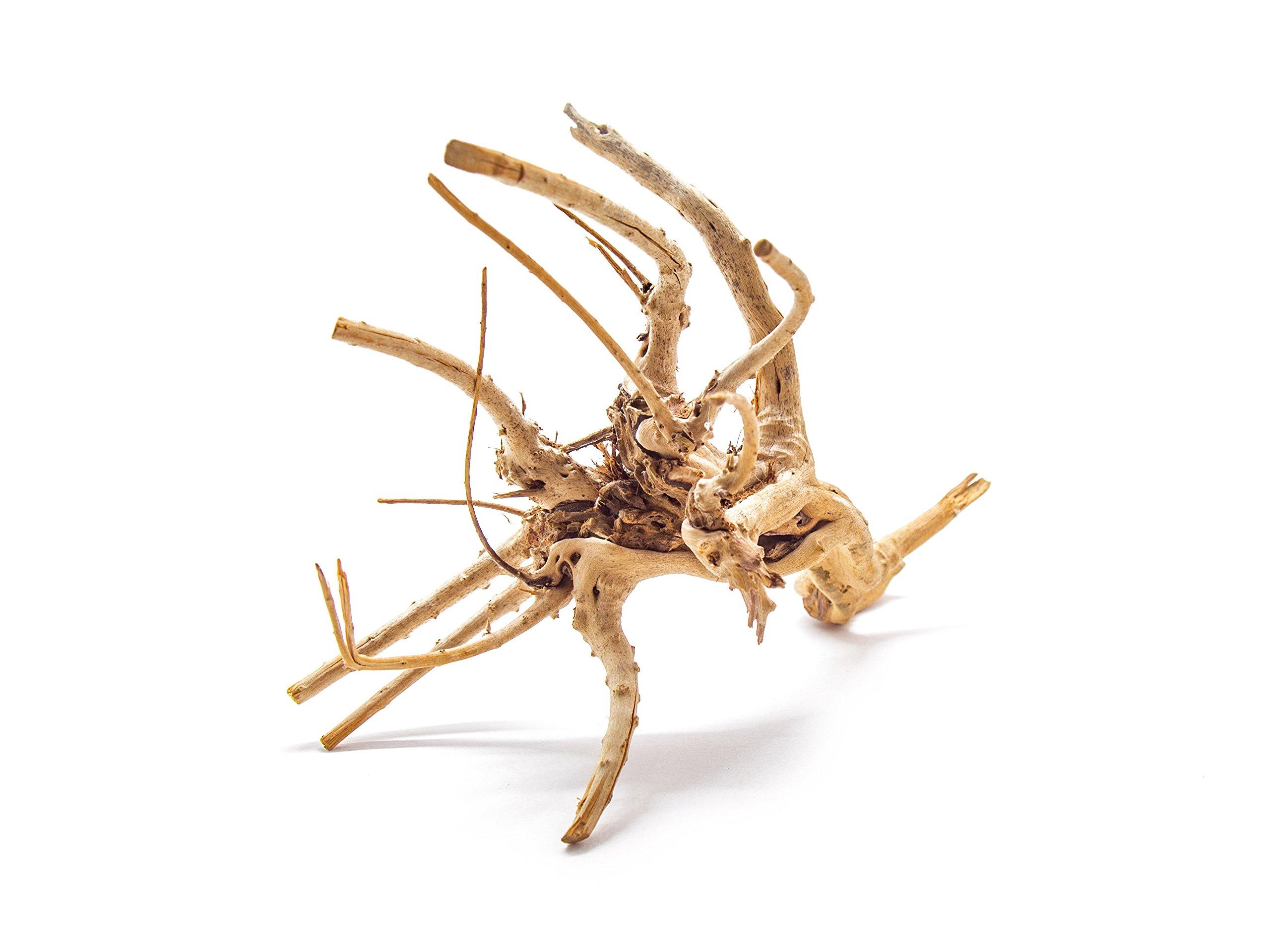 Aquatic Arts 1 Small Piece of Spider Wood aka Azalea Natural Aquarium Driftwood, 6-9''