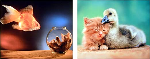 Funny Cat And A Fish In A Bowl Pet Friend Cute Lovely Animals Adorable Poster