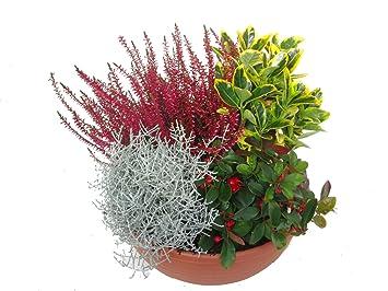5ecce0acd9a98b bepflanzte Schale mit bunter Herbst-Winter-Bepflanzung
