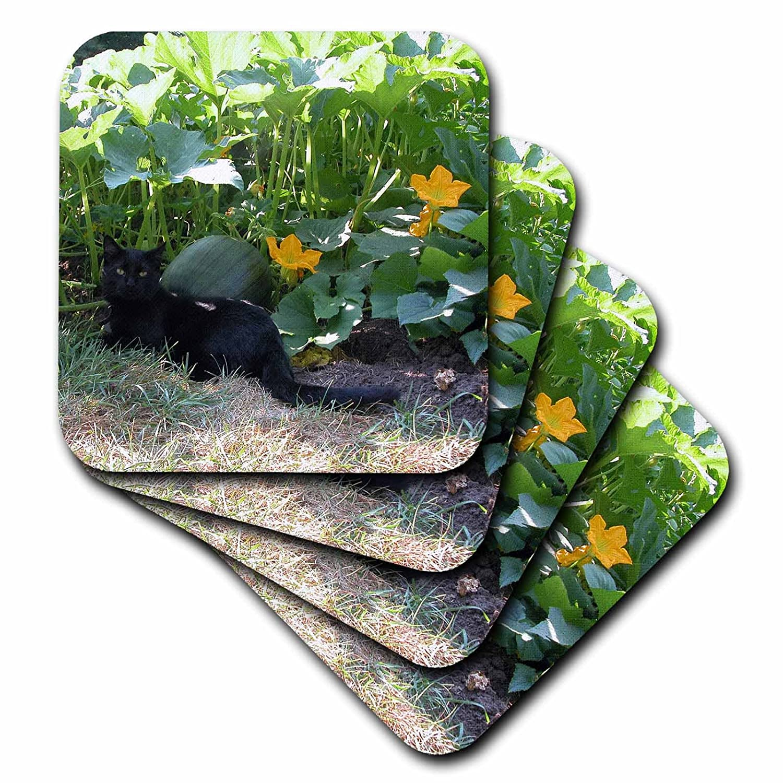 3dRose cst_29595_3 Black Cat in The Pumpkim Patch-Ceramic Tile Coasters, Set of 4