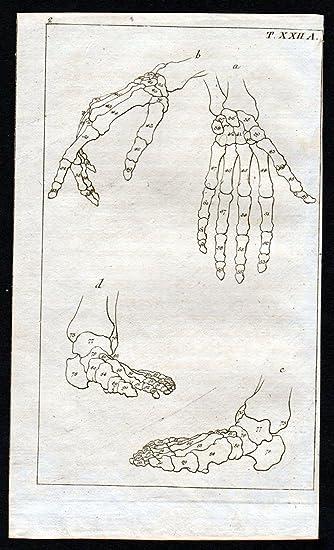 Grafik Hand Fuß foot bones Knochen Anatomie anatomy Medizin medicine ...