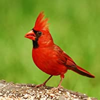 Name That Bird Species Trivia