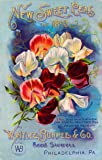 1893 - Philadelphia, Pennsylvania Burpee New Sweet Peas Vintage Flowers Seed Packet Travel Advertisement Poster. Poster measures 10 x 13.5 inches