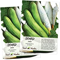 Seed Needs, Luffa Gourd (Luffa aegyptiaca) 2 Packages of 45 Seeds Non-GMO
