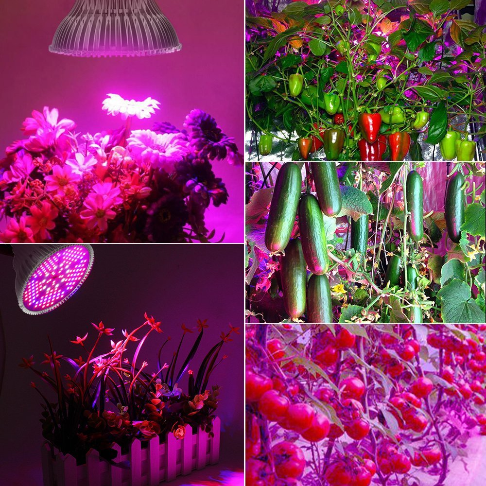 100W Led Plant Grow Light Bulb, Full Spectrum 150 LEDs Indoor Plants Growing Light Bulb Lamp for Vegetables Greenhouse and Hydroponic, E27 Base grow light Bulbs, AC 85~265V [2Pack] by EnerEco (Image #2)