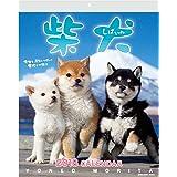 アクティブコーポレーション 2018年 犬 カレンダー 壁掛け 森田米雄 まるごと柴犬 ACL-11