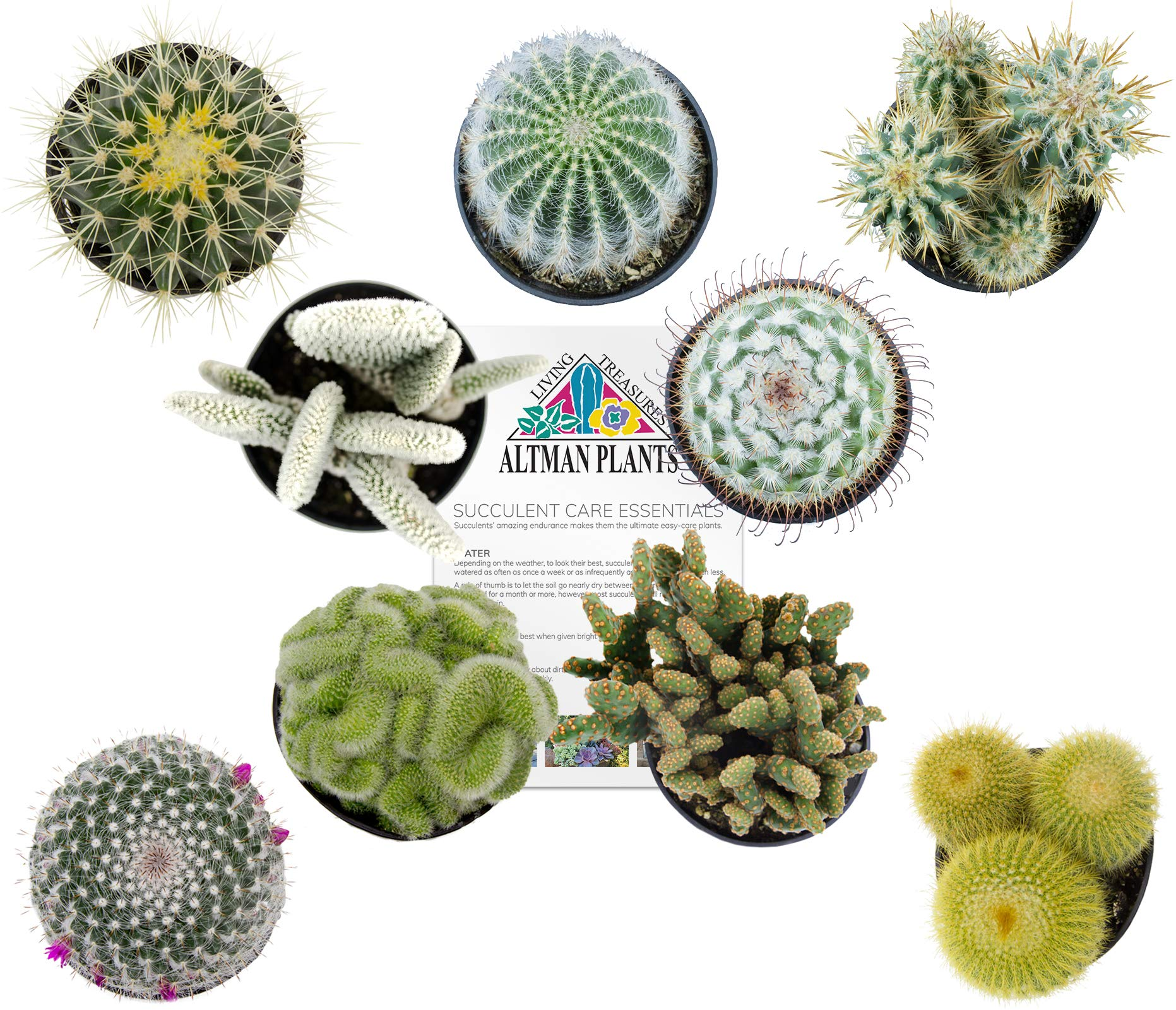 Altman Plants Assorted Live Cactus Collection large real cacti for planters or gifts, 3.5'', 9 Pack by Altman Plants (Image #1)