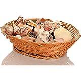 Assortito Conchiglie 900 grammi piccole medie e grandi dimensioni conchiglie può essere utilizzato per Decorazione Artigianato ecc