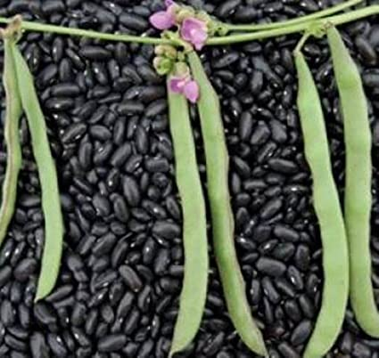 Cherokee Trail of Tears Pole Beans 20 Seeds Carried on This Tragic Death  March