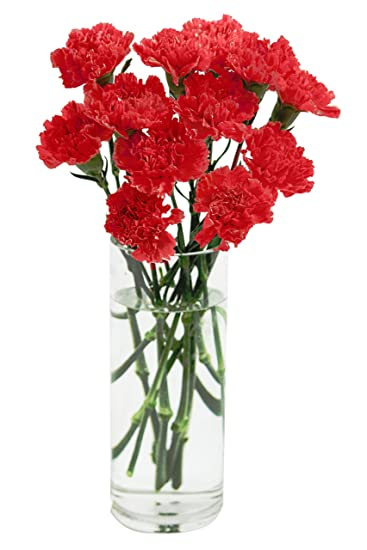 amazon com red carnation bouquet 12 stems with vase grocery