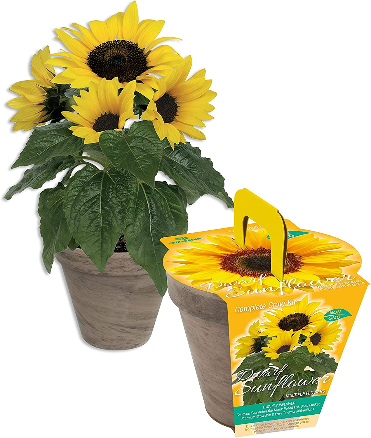 Dwarf Sunflower Mothers Day Grow Kit   Grow Your own Dwarf Sunflower in just Weeks   Unique Basalt Pot, Soil Disk and Sunflower Seeds (Dwarf Sunflower Variety) TotalGreen Product