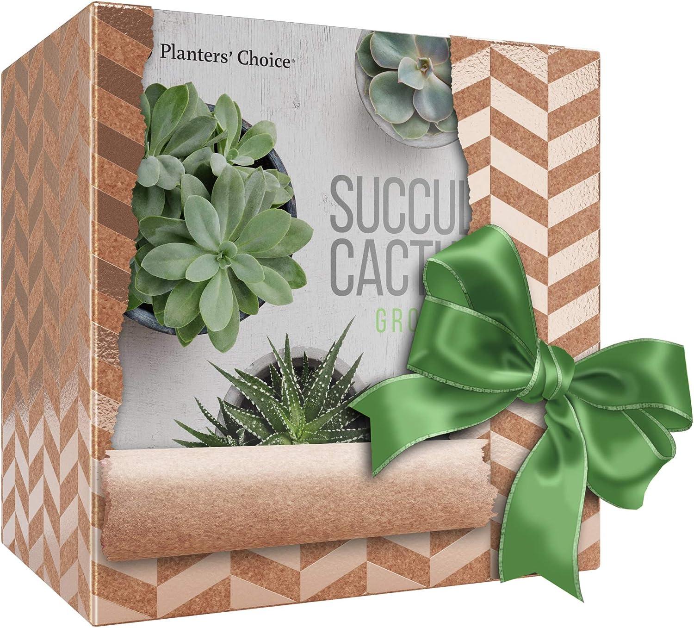 Kit de Cultivo de Cactus y Plantas Suculentas con Medidor de ...