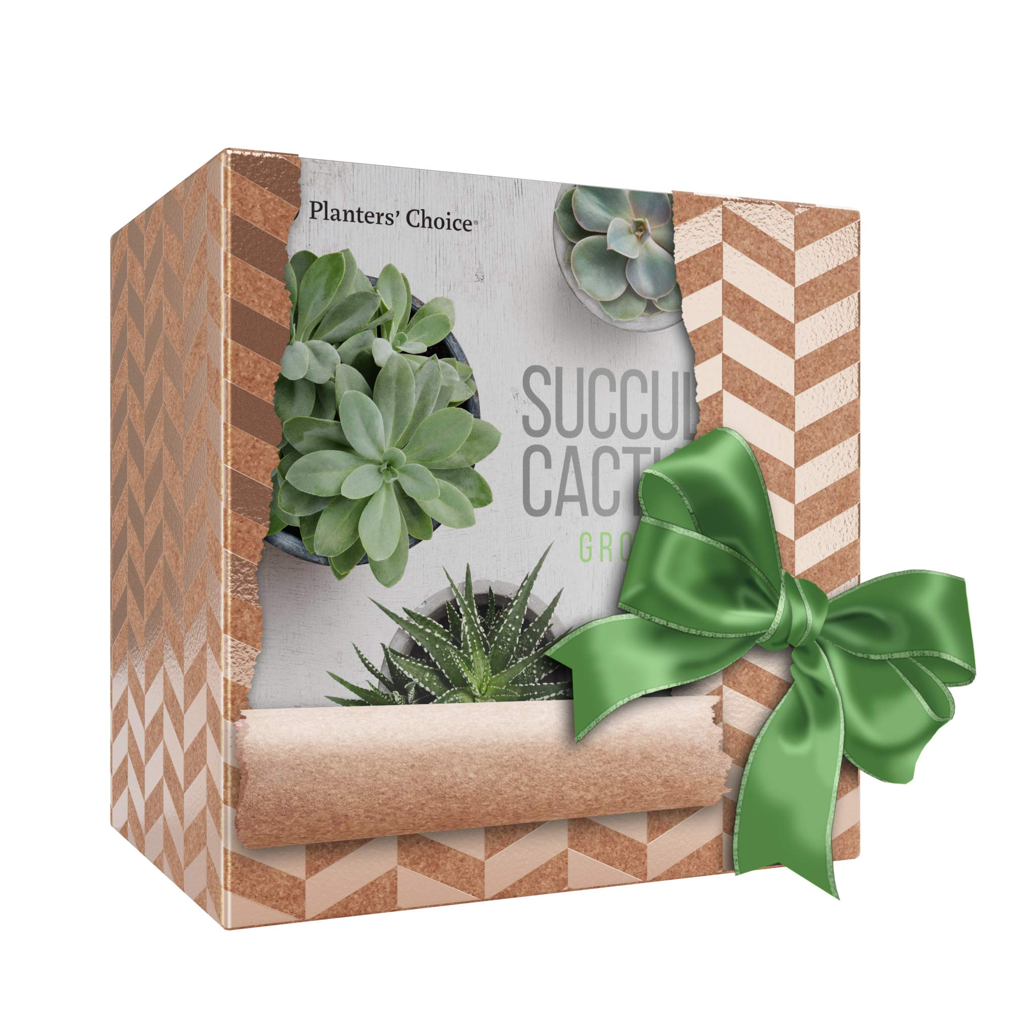 Succulent & Cactus Growing Kit with Moisture Meter - Grow 4 Plants - Includes Everything Needed to Grow Successfully - Great Gift (Cactus & Succulent) by Planters' Choice (Image #8)