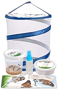 Nature Gift Store Live Butterfly Kit: Shipped with 5 Painted Lady Caterpillars Now- Pop Up Cage