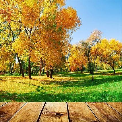 Yongfoto 2x2m Vinyl Foto Hintergrund Herbst Landschaft Kamera