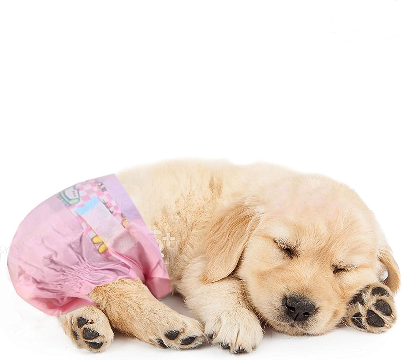 SALE Doggy Diaper