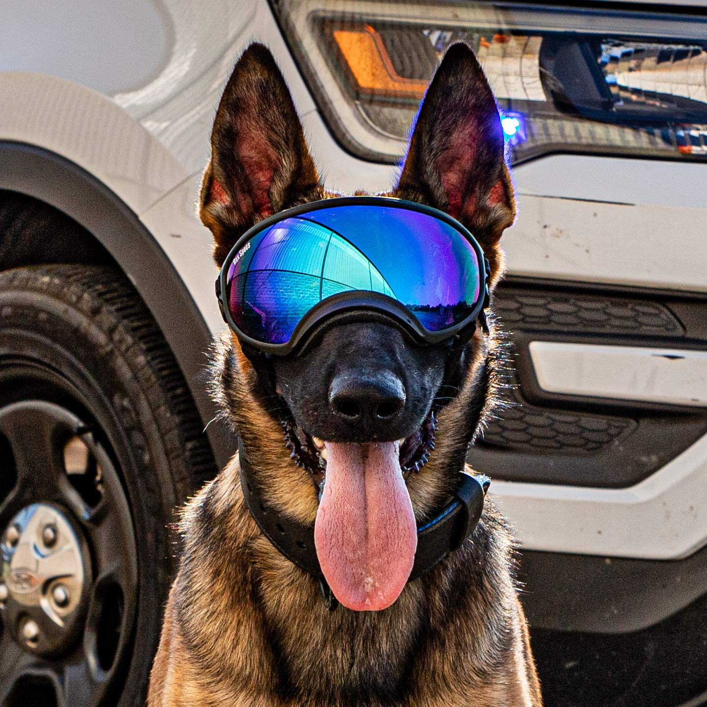 Rex Specs Dog Goggles - Eye Protection for The Active Dog by Rex Specs