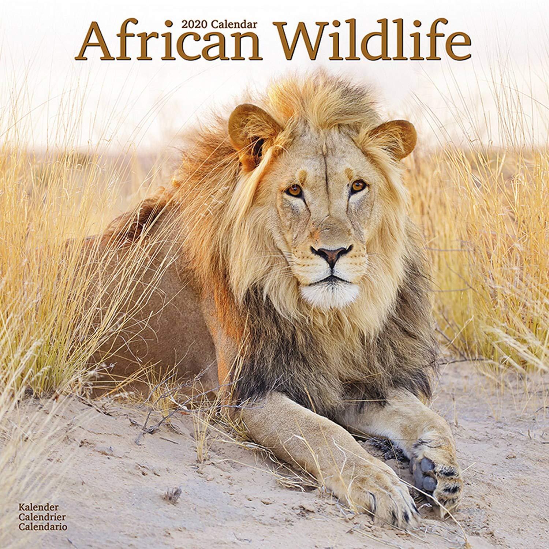 Calendario Tiger 2019.Wildlife Calendar Tiger Calendar Lion Calendar