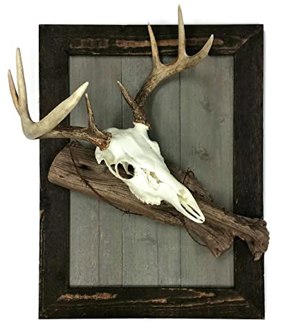e4aa5b5ae25 Amazon.com   Goltine Rustic European Deer Skull Mount Wood Plaque 21 ...