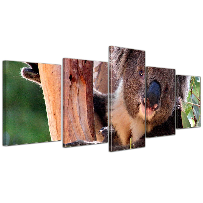 Bilderdepot24 Cuadros en Lienzo koala - 200x80 cm 5 piezas - listo ...