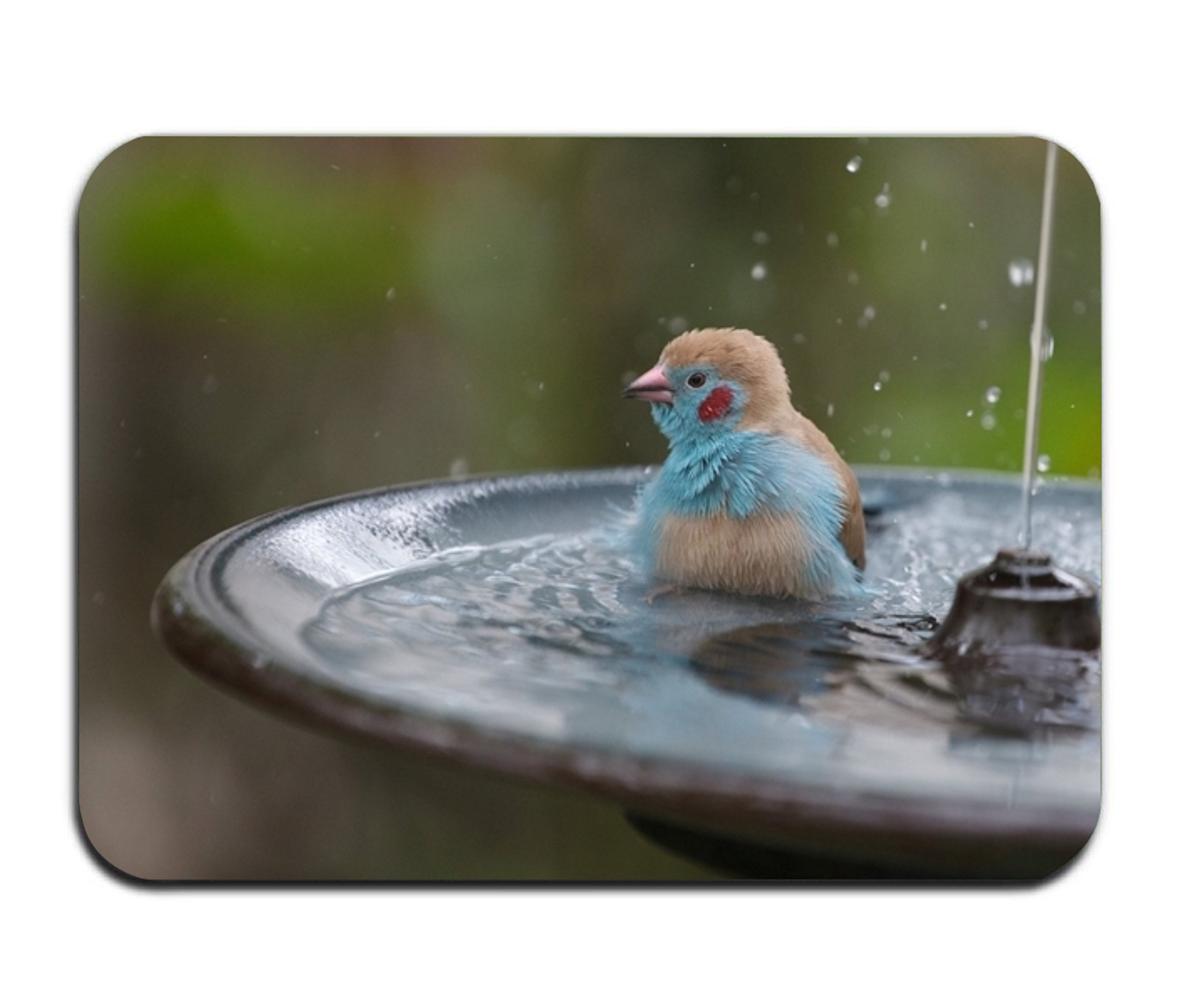 Cecil Beard Bird Blur Fountain Bathroom Kitchen Rug Mat Welcome Door MatPrinted