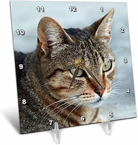 3dRose dc_16934_1 Desk Clock, Tabby Cat Portrait, 6 by 6-Inch