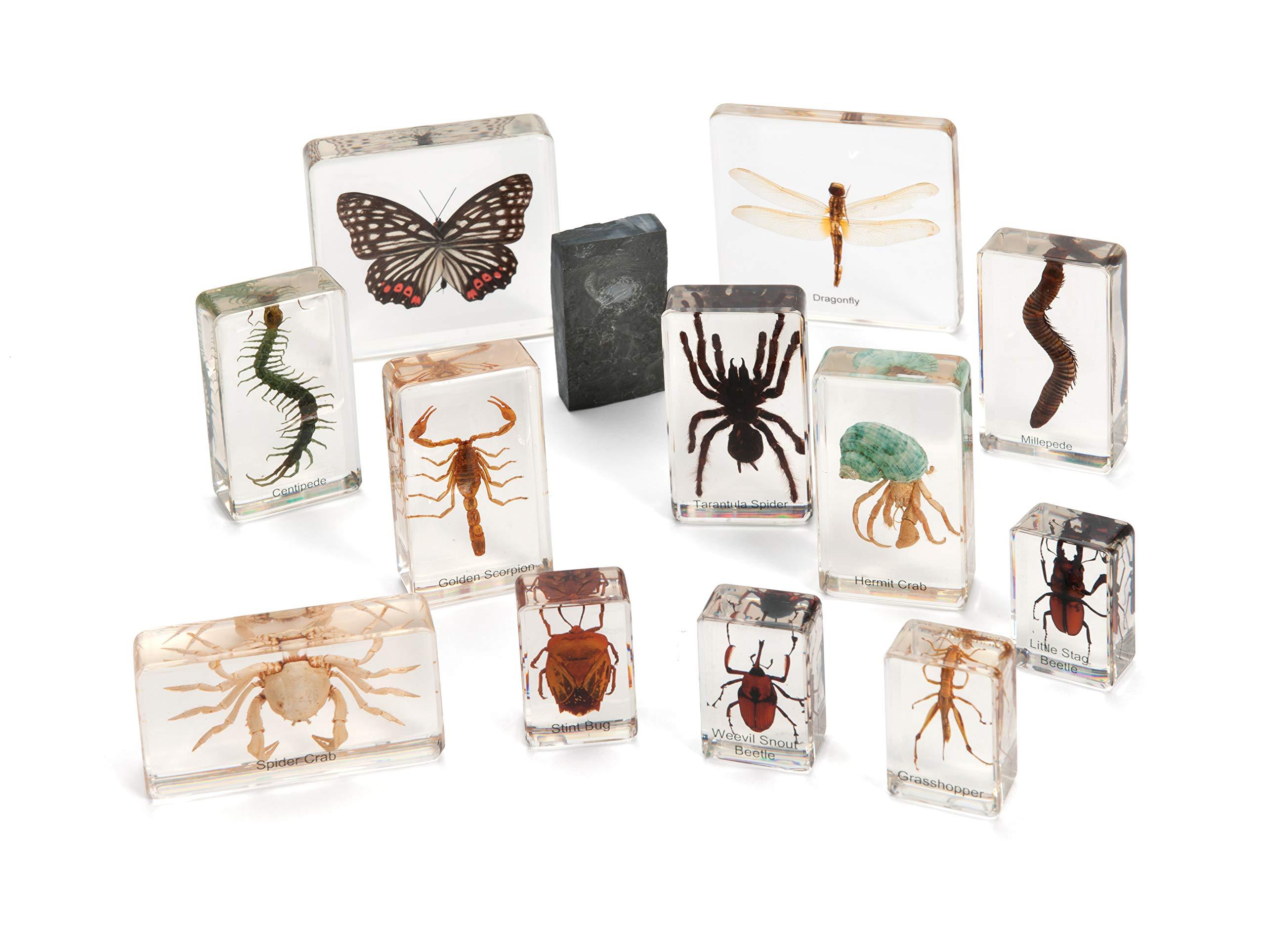 Cicada Education KBMB05 Knowledge Builder Arthropods, Clear