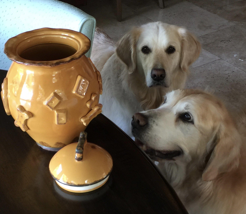 Carmel Ceramica PDJB3003 Dog Treat Jar, Baby Blue