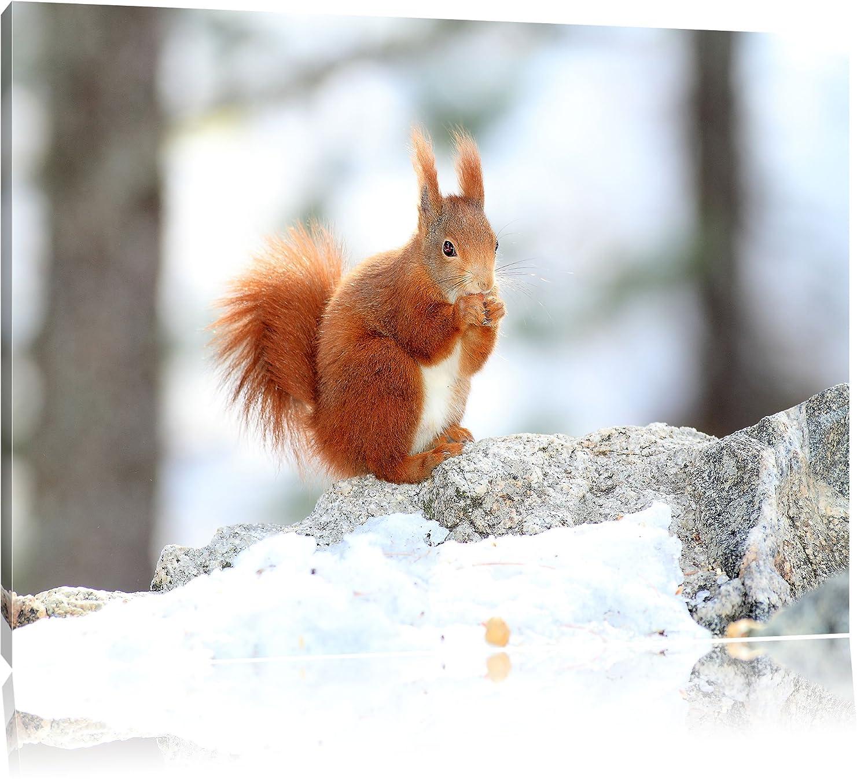 Eichhörnchen im Schnee Bild auf Leinwand, XXL riesige Bilder fertig ...